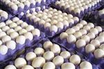توقیف محموله ۹ تُنی تخم مرغ فاقد مجوز دامپزشکی در نهبندان؛