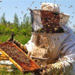 آغاز طرح پايش زنبورستانهاي خراسانجنوبي؛