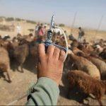 آغاز طرح واکسیناسیون تب برفکی در شهرستان خوسف