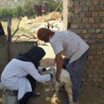 اجرای طرح ایمن سازی کنترل طاعون نشخوارکنندگان کوچک در سربیشه