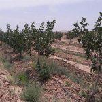 ضرورت اجرای شیوه آبیاری نوین کشاورزی/ ۱۳۴۳ هکتار مجهز به شیوه آبیاری نوین شد