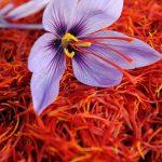 سرایان رتبه دوم زعفران از نظر تولید را در خراسانجنوبی دارد