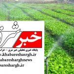 اجرای ۴۸ پروژه سامانههای نوین آبیاری در شهرستان طبس