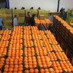 ذخیره سازی ۴۰۰ تن سیب و پرتقال طرح تنظیم بازار در استان؛