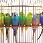 کشف محموله قاچاق پرندگان زینتی در بیرجند