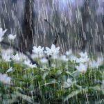 افزایش ۹ درصدی میانگین بارشهای خراسان جنوبی