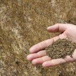 سودمیلیاردی به جیب کشاورزان زیره کار