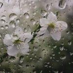 بارش باران در برخی نقاط خراسان جنوبی