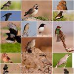 شناسایی و ثبت ۵۵ گونه جدید پرنده در خراسان جنوبی